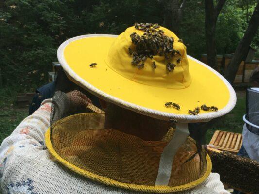 Bienen am Kopf