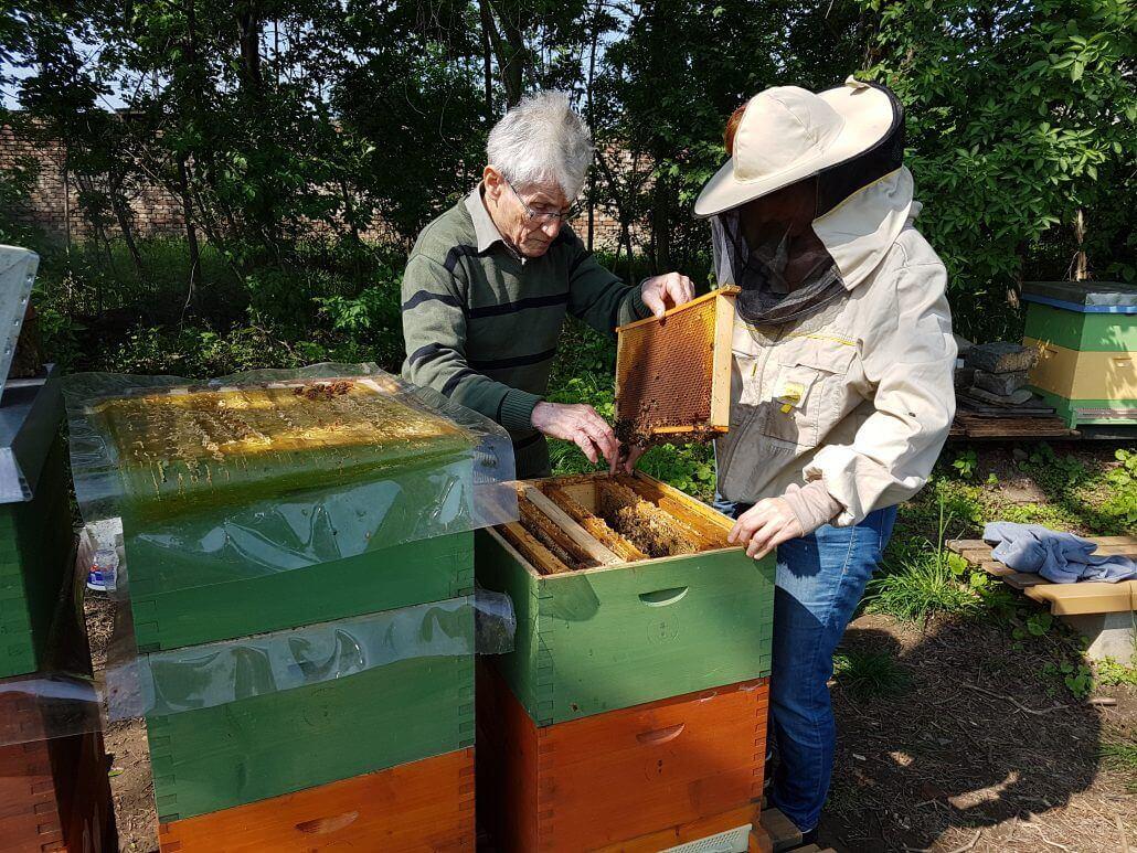Bienenzuchtverein Wien Ortsgruppe 1