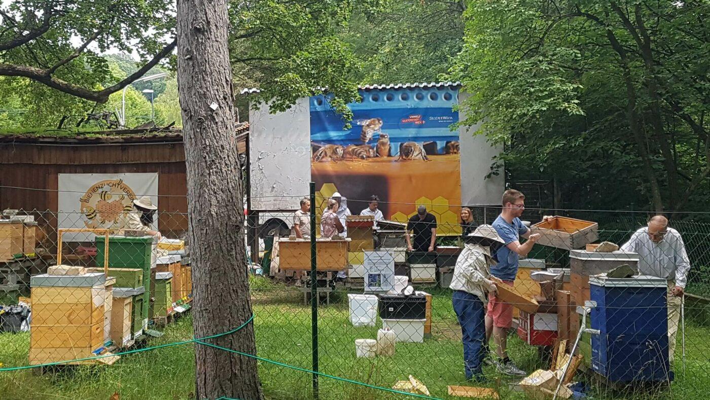 Lehrbienestand Bienezuchtverein Wien West